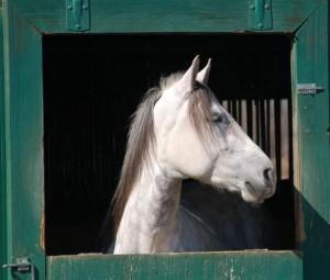 horseinpictureframe_lg