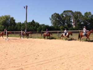 Horses 9